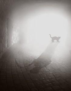 svart-katt-3-uten-tekst